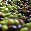 L'olio extravergine di oliva e la Scienza dell'Alimentazione